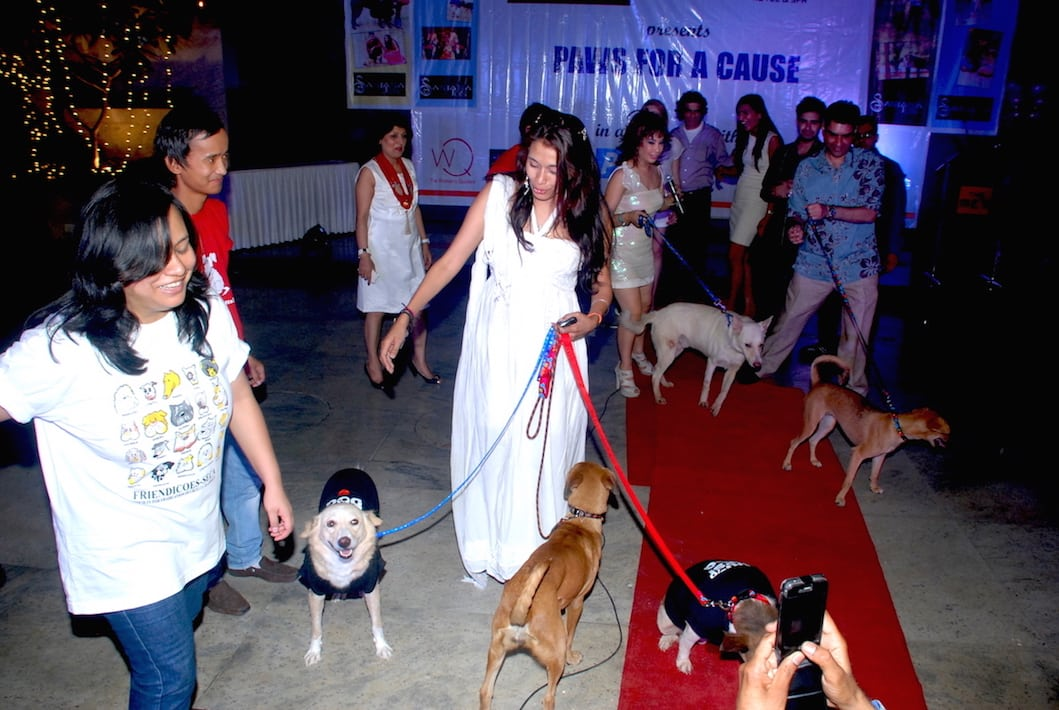 Paws For A Cause show by dr.Sanjana Jon